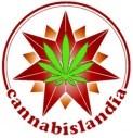 semillas cannabislandia